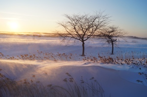 Snowy Haze