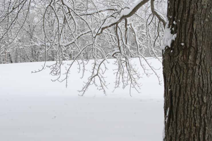 snowy-feb-day-in-maudsley-032