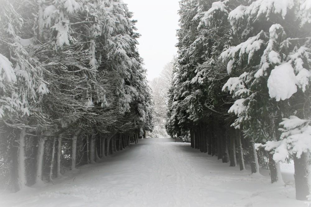 Snowy Feb day in Maudsley 054 (2)